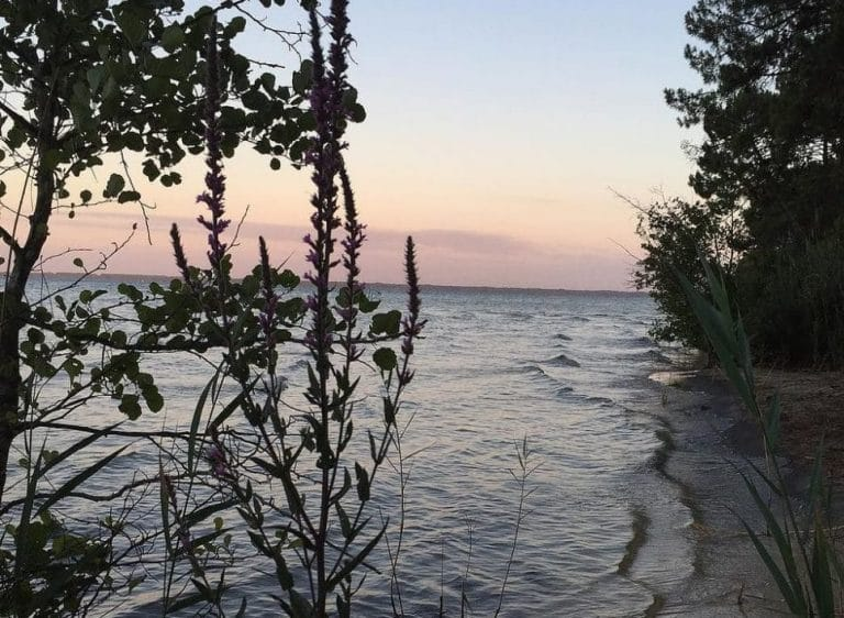 Le Lac de Cazaux